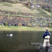 John Day River, Steelhead
