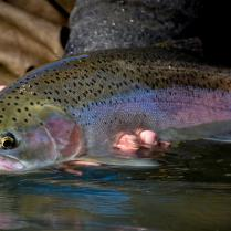 Grande Ronde Floats - Little Creek Outfitters